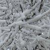 01102019_Snow_on_trees_BM